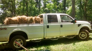 The truck loaded with hay