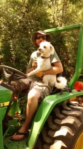 Harley on the tractor with our dog Noah