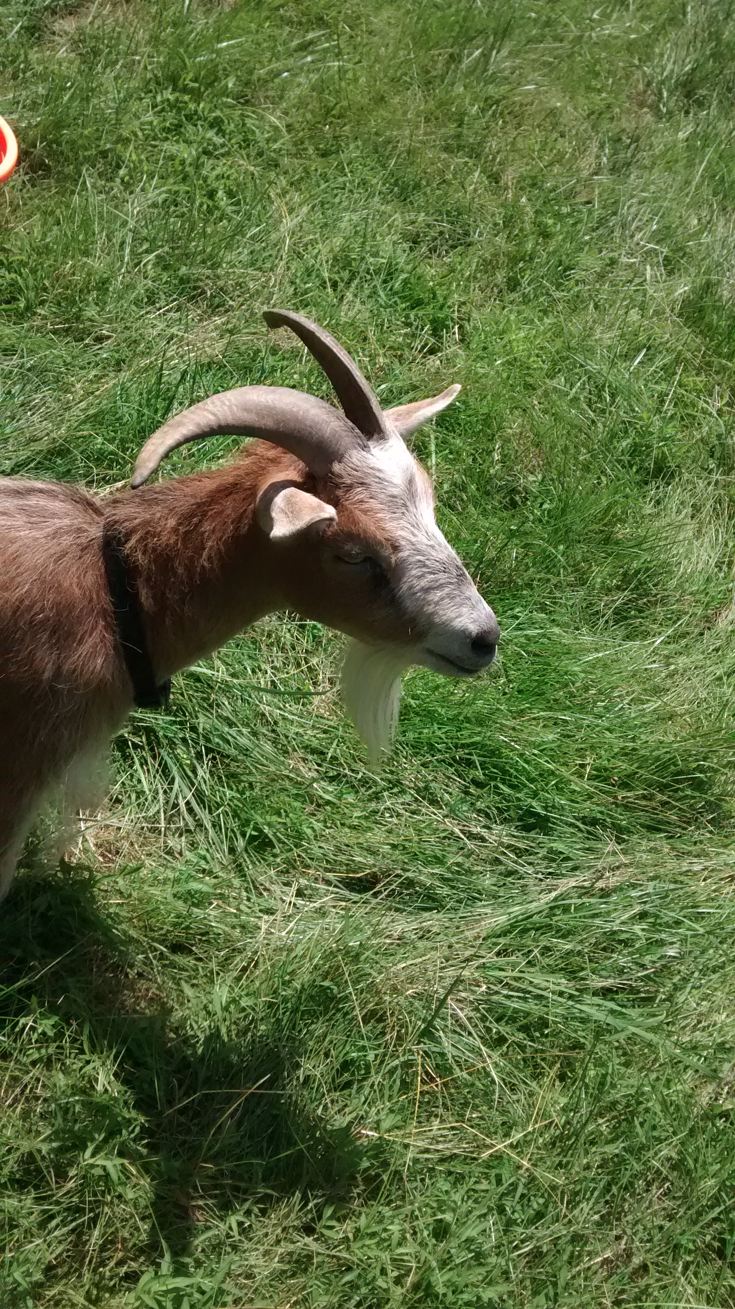 Portable goat pen | Independence Homestead