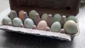 A dozen Independence Homestead eggs.