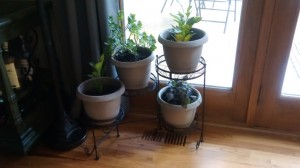 Some of our new houseplants