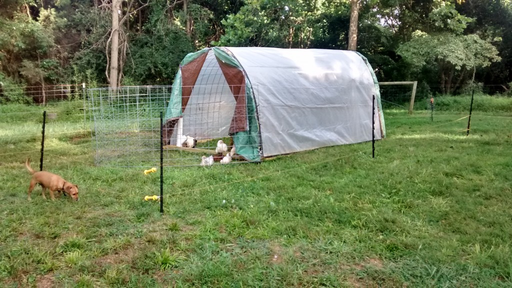 The completed hoop house
