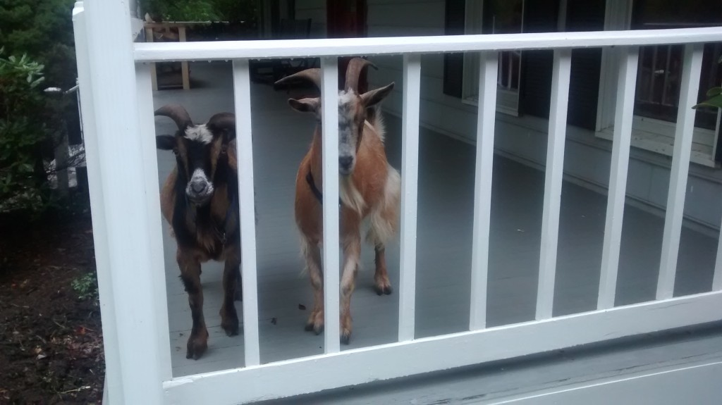 Hi guys! We thought we'd hangout on the front porch.
