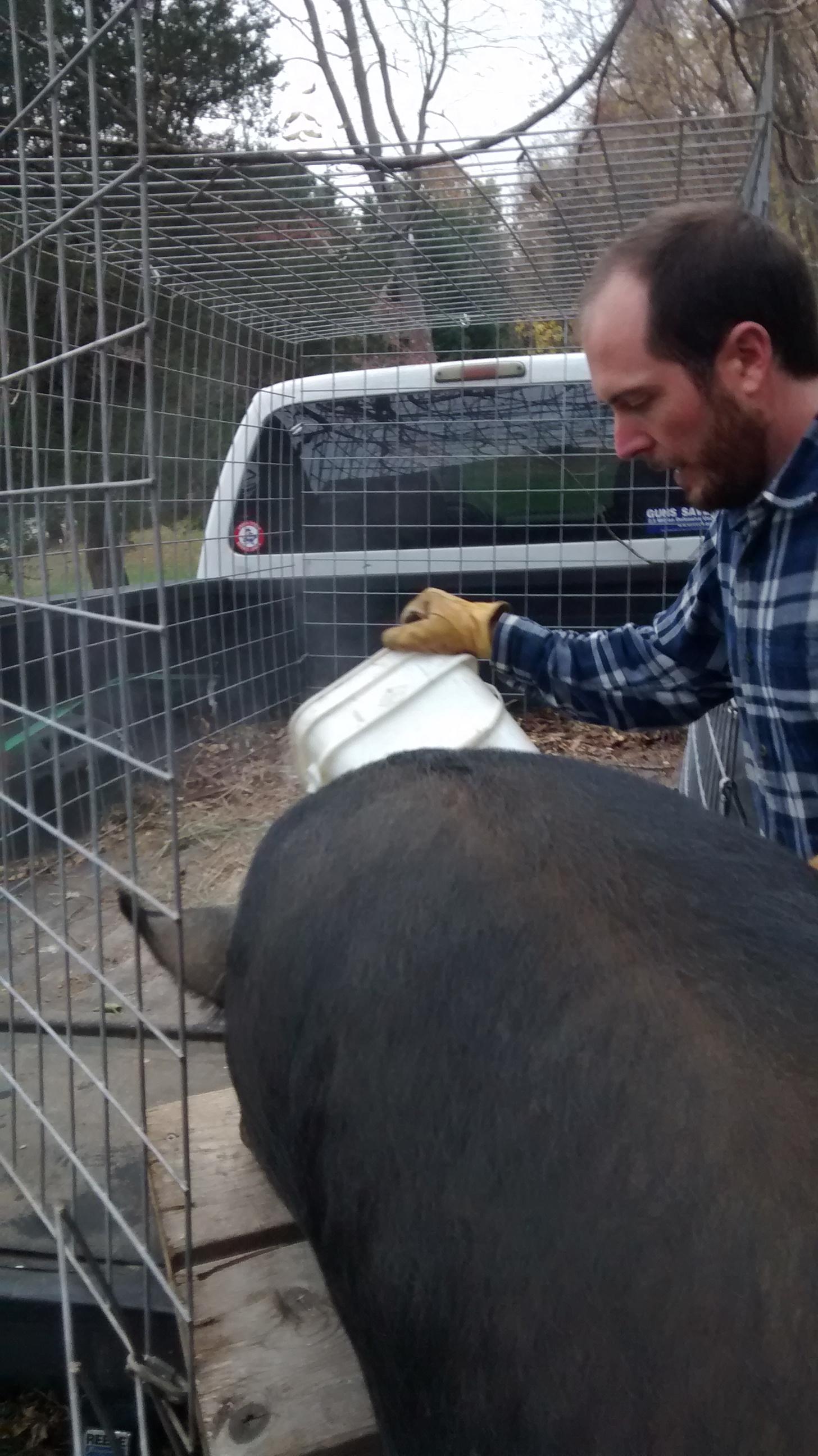DIY Truck Bed Livestock Carrier | Independence Homestead